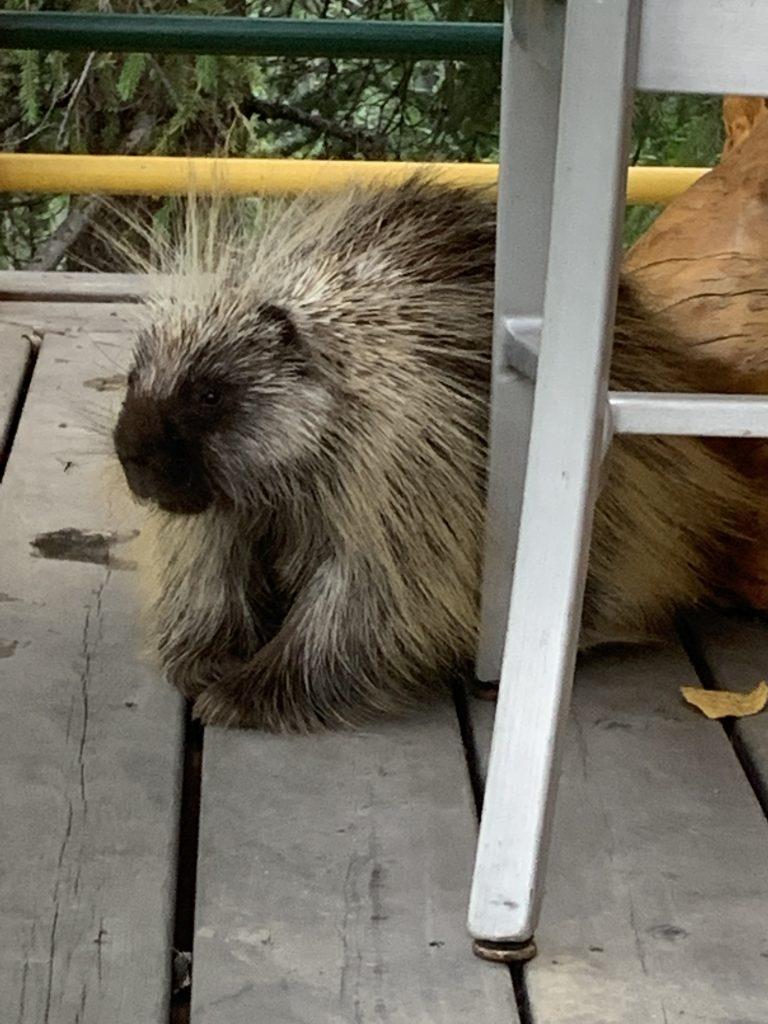 Leonard the Porcupine